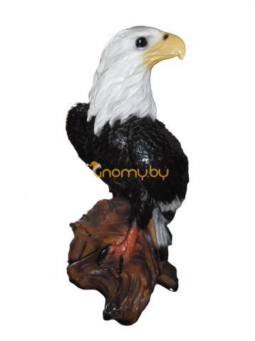 Орёл большой, с белой шеей